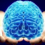 Semana coloca o cérebro no centro dos debates
