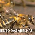 Causa das abelhas é premiada em Cannes