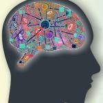 USP apresenta cérebro ao público