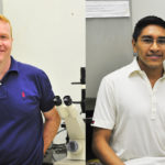 Células de gordura podem inibir a formação óssea