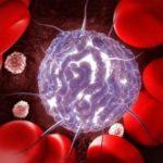 Bolsa de pós-doutorado em Biologia das Células-troncos