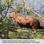 Conservação dos mamíferos no Café com Ciência
