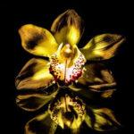 Inscrições abertas para Curso de Orquídeas