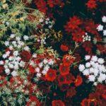 Característica das flores é tema de discussão na Casa da Ciência