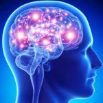 Sinvastatina protege cérebro durante sepse