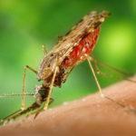 GPS do celular vai mapear locais de transmissão da malária