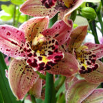 Orquídeas no Café com Ciência