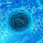 As perspectivas das pesquisas com células-tronco