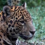 """Caça de animais silvestres no """"Ambiente É o Meio"""""""