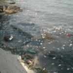 """Poluição Marinha no """"Ambiente É o Meio"""""""