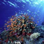 """Impactos no habitats aquáticos no """"Ambiente É o Meio"""""""