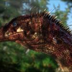 Pesquisadores reconstroem cérebro de um dos dinossauros mais antigos do mundo