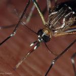 USP Ribeirão combate ao Aedes aegypti