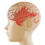 Fórum abordará Proteção Cerebral Infantil