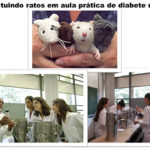 Bichos de pelúcia substituem animais de laboratório