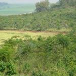 Calouros da Filô vão conhecer a Floresta do Campus