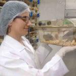 3Rs em experimentos com animais