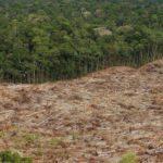 """Desmatamento e Aquecimento Global no """"Ambiente É o Meio"""""""