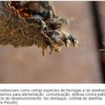 Vida de insetos sociais dependem de fungos e bactérias
