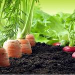 Os desafios da produção orgânica