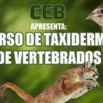 Taxidermia é tema de curso