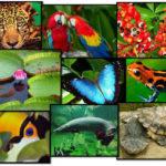 """Biodiversidade e gerações futuras no """"Ambiente é o Meio"""""""