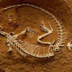 """Paleontologia no """"Café com Ciência"""""""