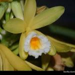 USP Ribeirão oferece curso de orquídeas