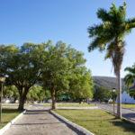 """Arborização urbana e qualidade do ar são temas do """"Ambiente é o Meio"""""""