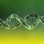 Livro aborda técnica para amplificar cópias de DNA em tubo de ensaio