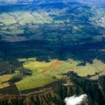 Efeito das mudanças climáticas nas florestas