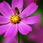Uso de agrotóxicos prejudica a sobrevivência das abelhas